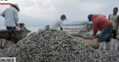 Messico Migliaia di pesci muoiono senza motivo