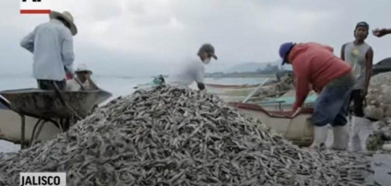 Messico: Migliaia di pesci muoiono senza motivo
