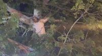 Quarantena Gesu appare crocifisso ad un albero