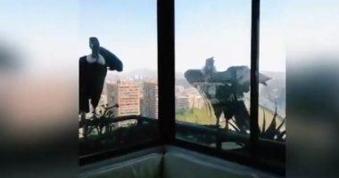 Quarantena Incredibile due condor guardano un cagnolino dalla finestra