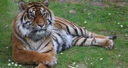 Quarantena gli animali dello zoo rischiano la morte per mancanza di cibo