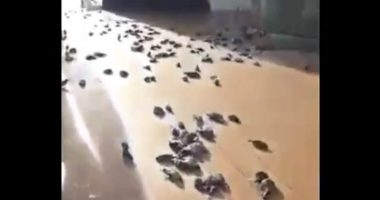 Uccelli morti piovono dal cielo su una nave da crociera