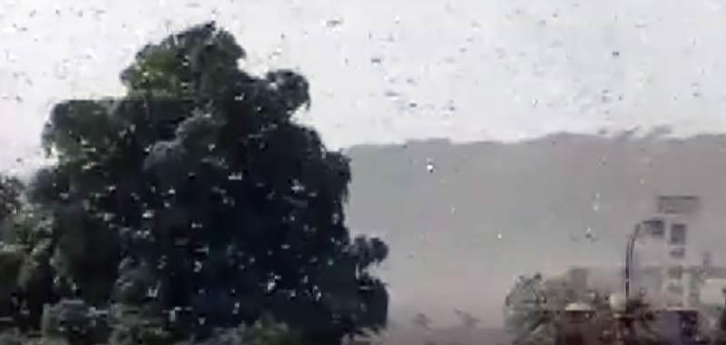 India Video mostra la piaga biblica delle locuste in atto