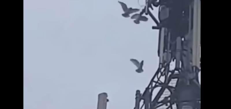 Uccelli attaccano le torri del 5G cosa sta succedendo