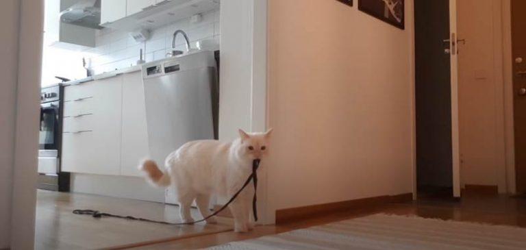 Lascia il gatto da solo in casa, il filmato prende al cuore