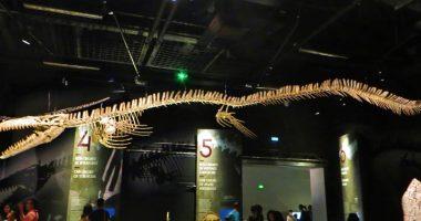 Ritrovamento fossile gigante Era un uovo di Mosasauro
