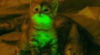 Gatti geneticamente modificati brillano ne oscurita