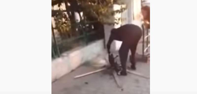 Livorno immigrato cucina gatto in strada