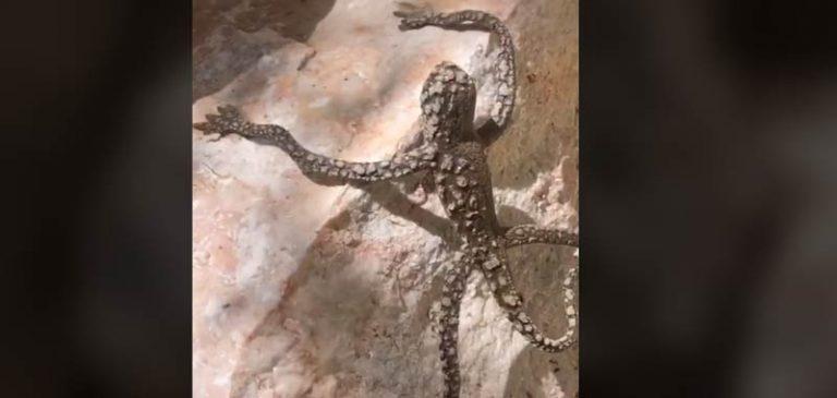 Su TikTok viene filmata una creatura che sembra aliena