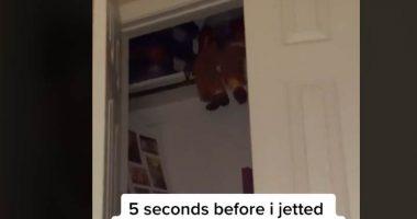 Babysitter scappa di casa per una bambola impossessata