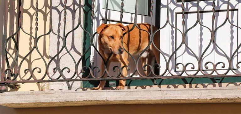 Caltanissetta, morto cane chiuso sul balcone di casa per due giorni