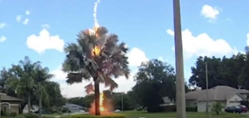 Cielo limpido un fulmine colpisce un albero incredibile video