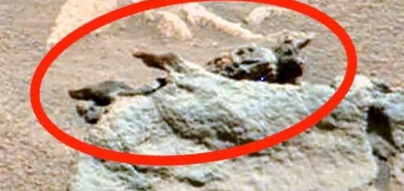 Fossile alieno avvistato su Marte