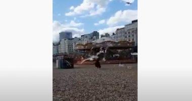 Gabbiani vogliono le patatine di una turista il video diventa virale