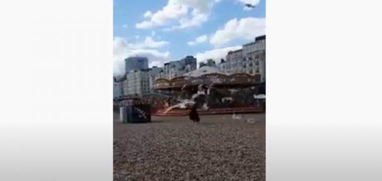 Gabbiani vogliono le patatine di una turista, il video diventa virale