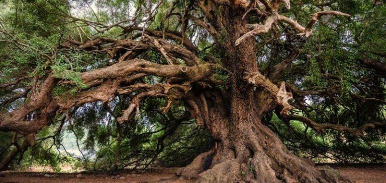 Tecnologia: Gli alberi saranno collegati alla rete 5G