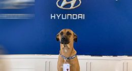 Il cane Hyundai diventa il primo rivenditore di auto al mondo