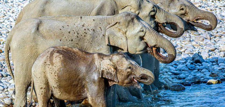 Twitter: quanti elefanti nel video, il web si scatena