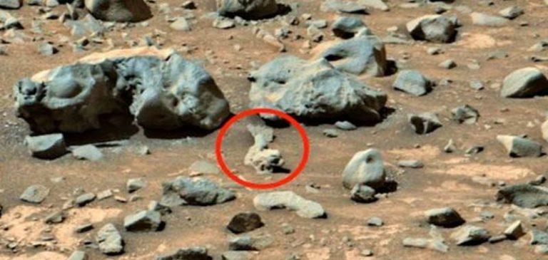 Marte: Possibili fossili di pesci sul pianeta rosso?