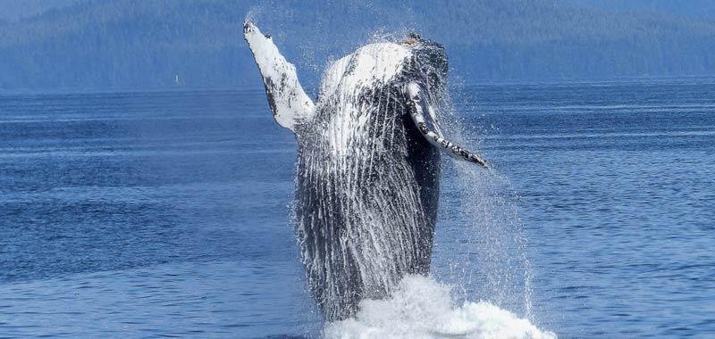 Agenzia di viaggi offre bagno di mezzanotte con una balena