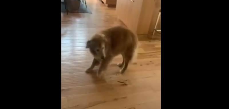 Baker il cane che danza ora di cena diventa virale