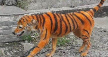 Cane dipinto come una tigre fa indignare il web
