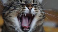 Gatto intrappolato in un container sopravvive per due mesi