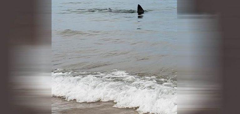 I bagnanti scioccati nel vedere lo squalo a riva