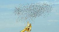 Migliaia di uccelli cadono dal cielo nel New Mexico