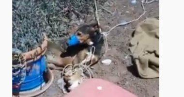 Spagna Shock Torturano un cane e filmano la sua agonia