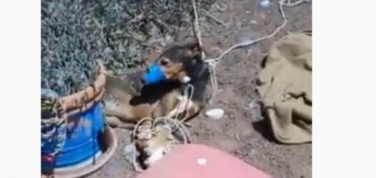 Spagna Shock: Torturano un cane e filmano la sua agonia