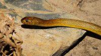intervento spettacolare rimosso un serpente da esofago