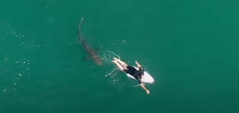 Drone riprende un surfista alle prese con uno squalo