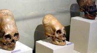 I teschi allungati ritrovati in Peru non sono Homo Sapiens
