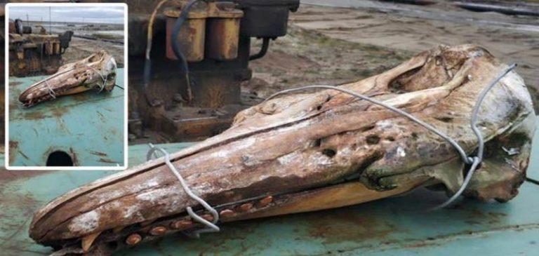 Misterioso cranio ritrovato nelle acque del nord