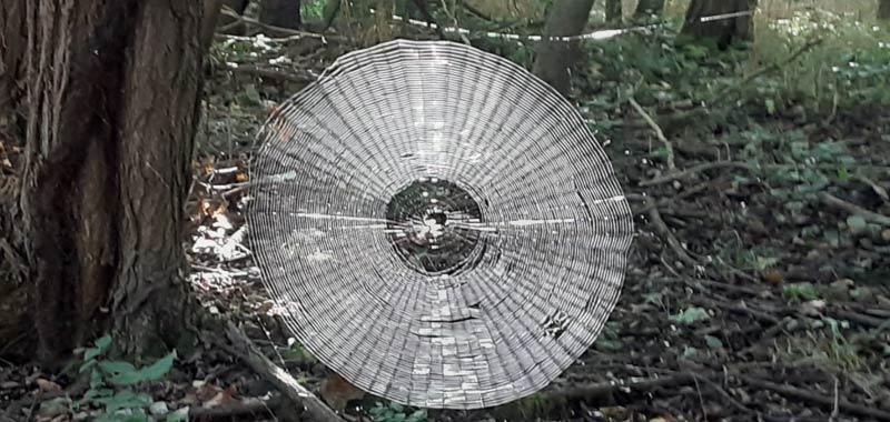 Ragnatela enorme ritrovata in una foresta