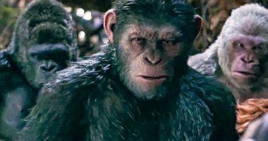 In Cina si lavora per un ibrido Scimmia-uomo