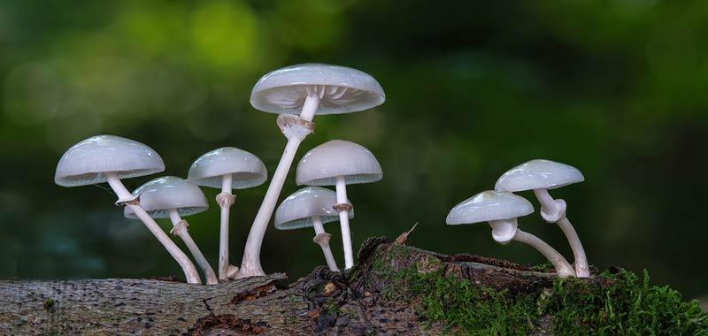 Scienza rivela uomo discende dai funghi