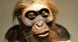 Scoperta creatura umanoide di 7 milioni di anni