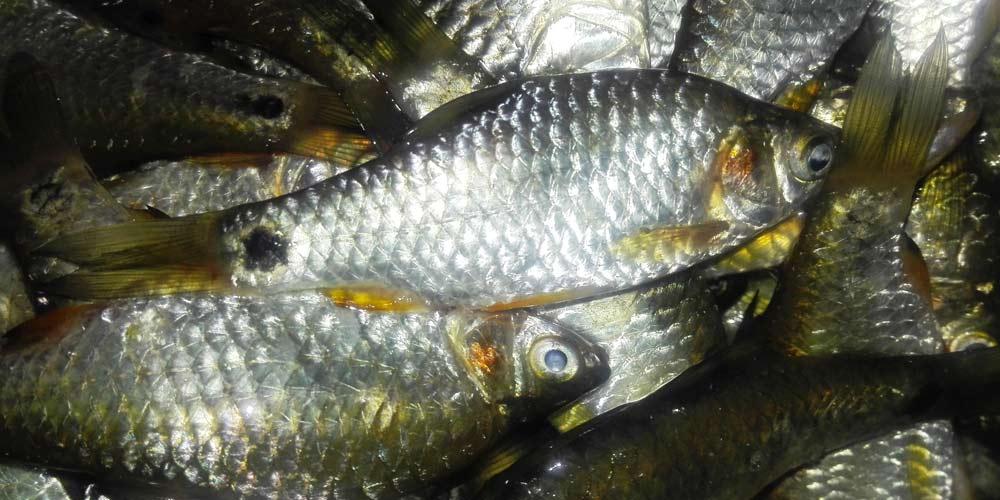 Pazienti con Covid rivelano odore di bruciato e di pesce