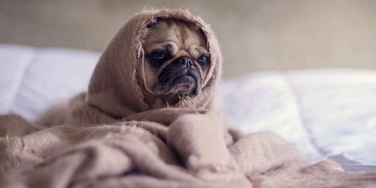 Scienza conferma: Dormire con un cane, fa bene