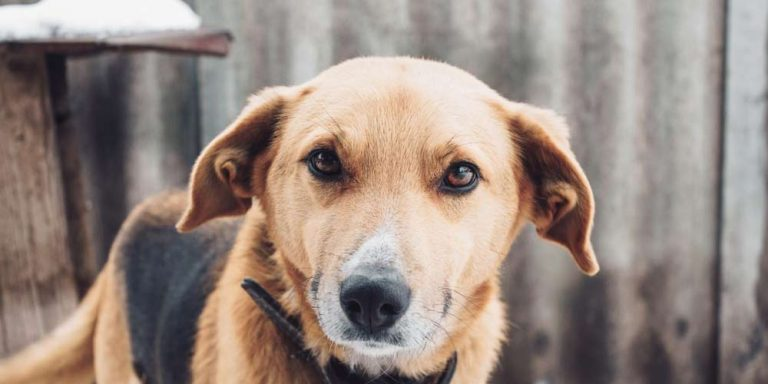 Scienza rivela: I cani non ci capiscono come noi crediamo