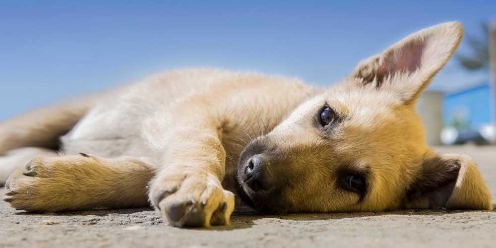 Il tuo cane puo prendere medicine per gli umani