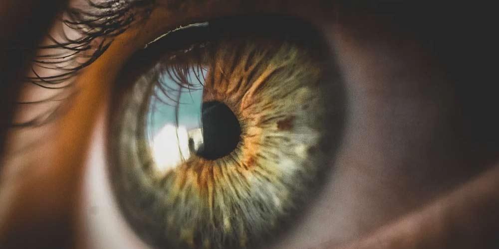 La retina degli occhi puo essere rigenerata