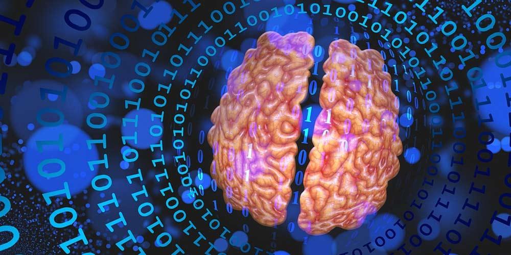 Scienza svela Come ringiovanire il cervello