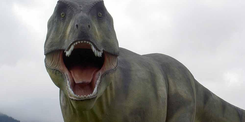 A 4 anni trova una vera impronta di dinosauro