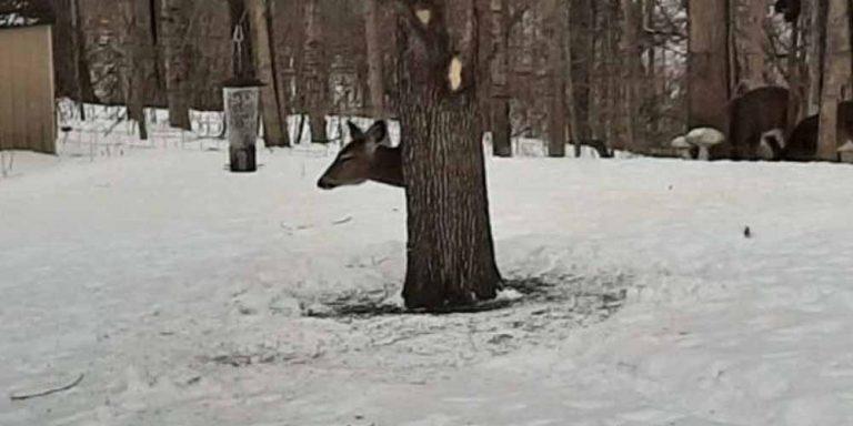 Cervo: Effetto ottico che fa impazzire la rete