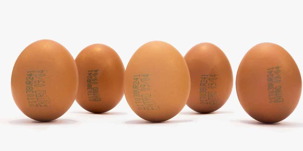 Dieta Mangiare molte uova fa bene alla salute
