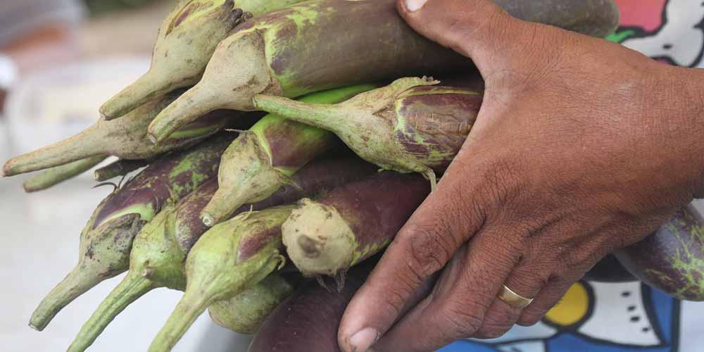 Gli OGM continuano a contaminare il nostro organismo