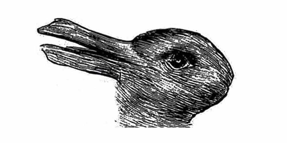 Anatra o coniglio il test psicologico nato nel 1892